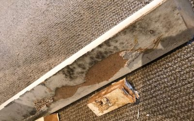Is your house making you sick? Common types of household mould